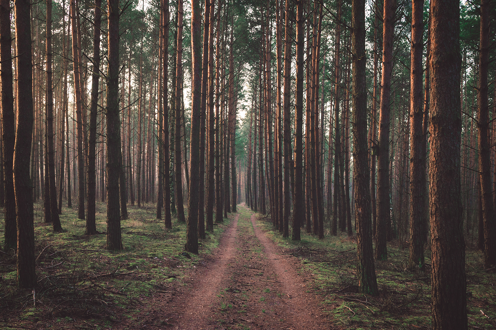 featured-onethousandtrees