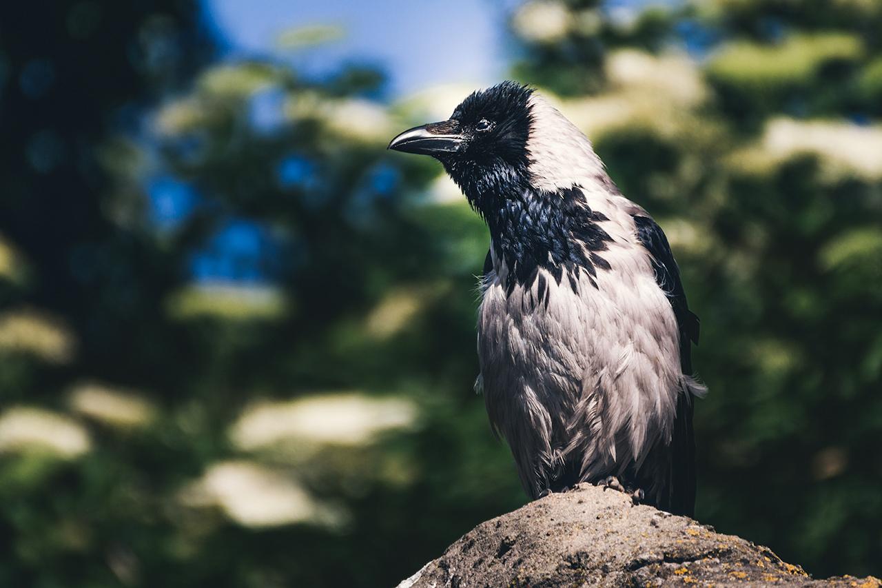 wawa-ptak
