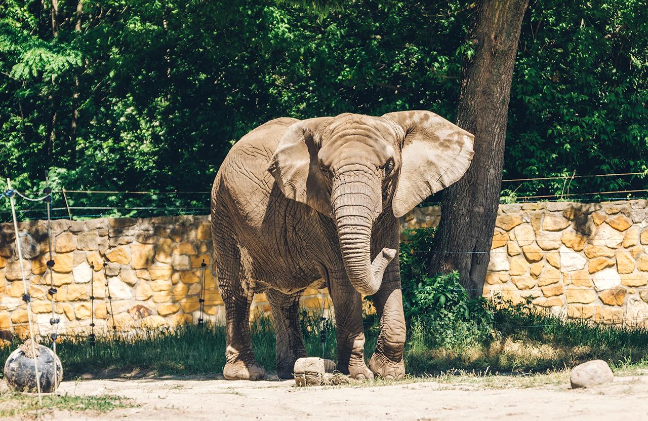 wawa-slon