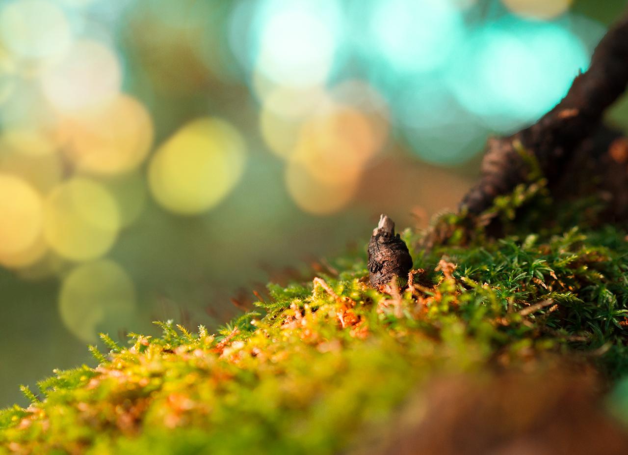drzewenko