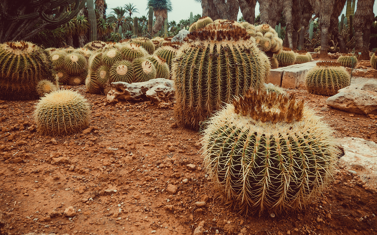 botanicactus5