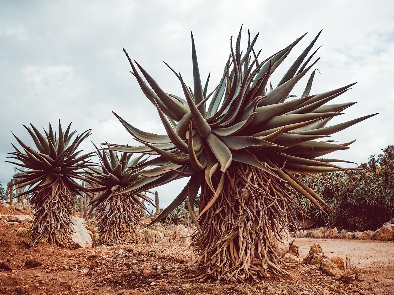 botanicactus6
